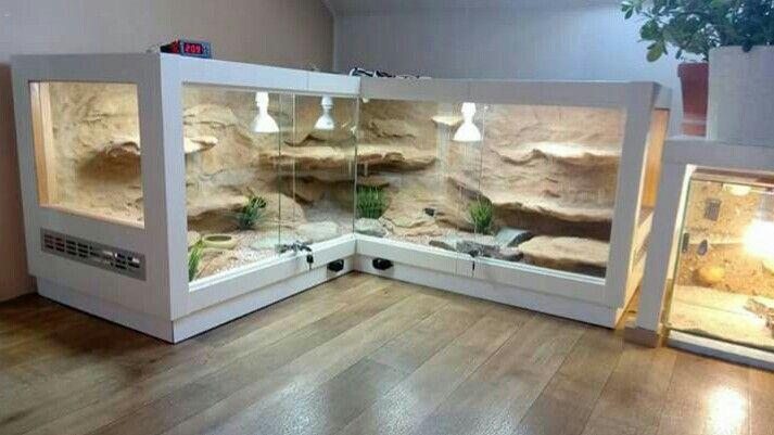 Pin By Ina Klopotowska On Animals Reptile Terrarium Snake Terrarium Reptile Room