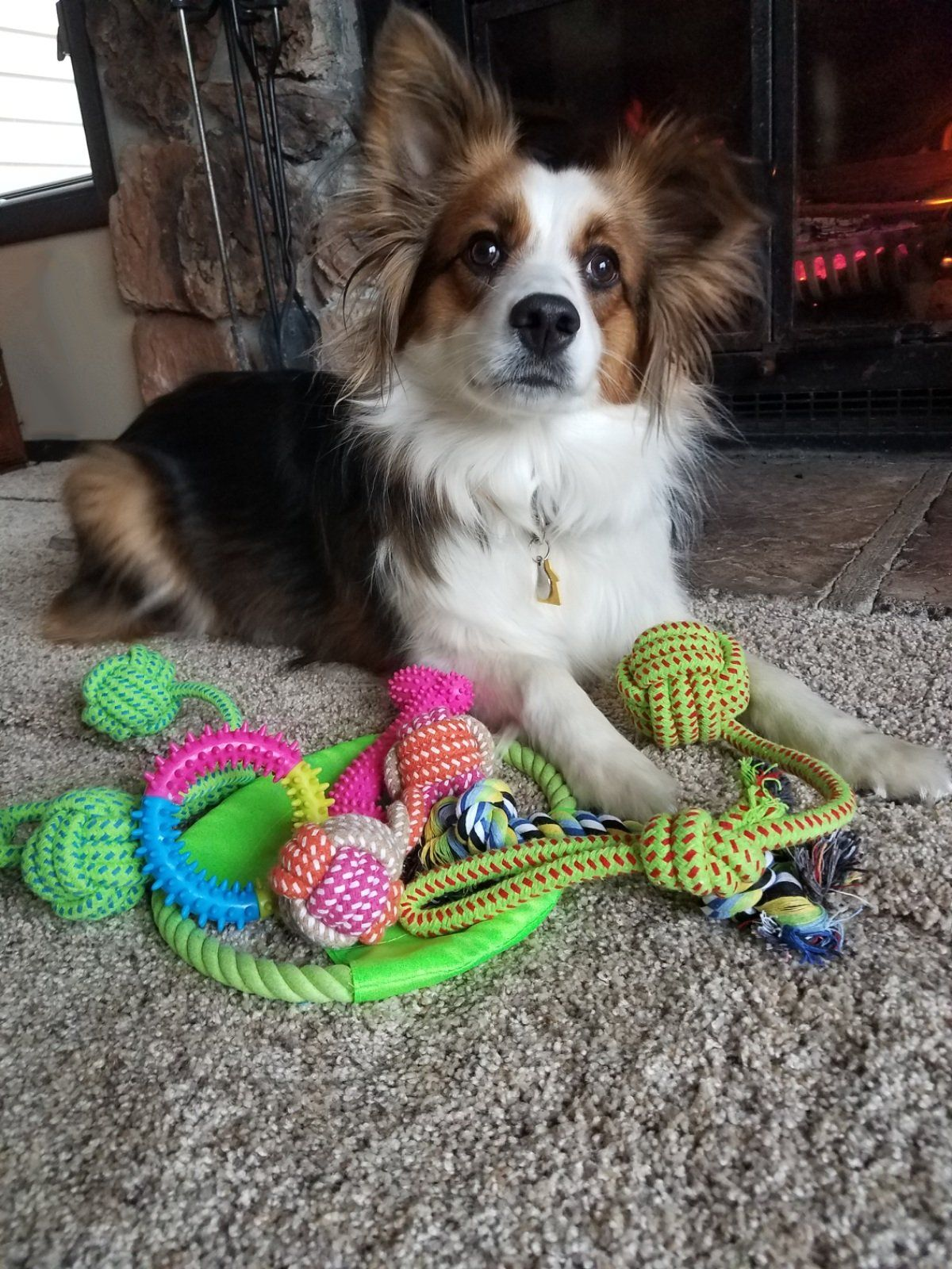 Dyno Ropes Dog Toys Variety Pack 11 Pack For More Information Visit Image Link Note It S An Affiliate Link To Am Healthy Puppy Rope Dog Toys Best Dog Toys