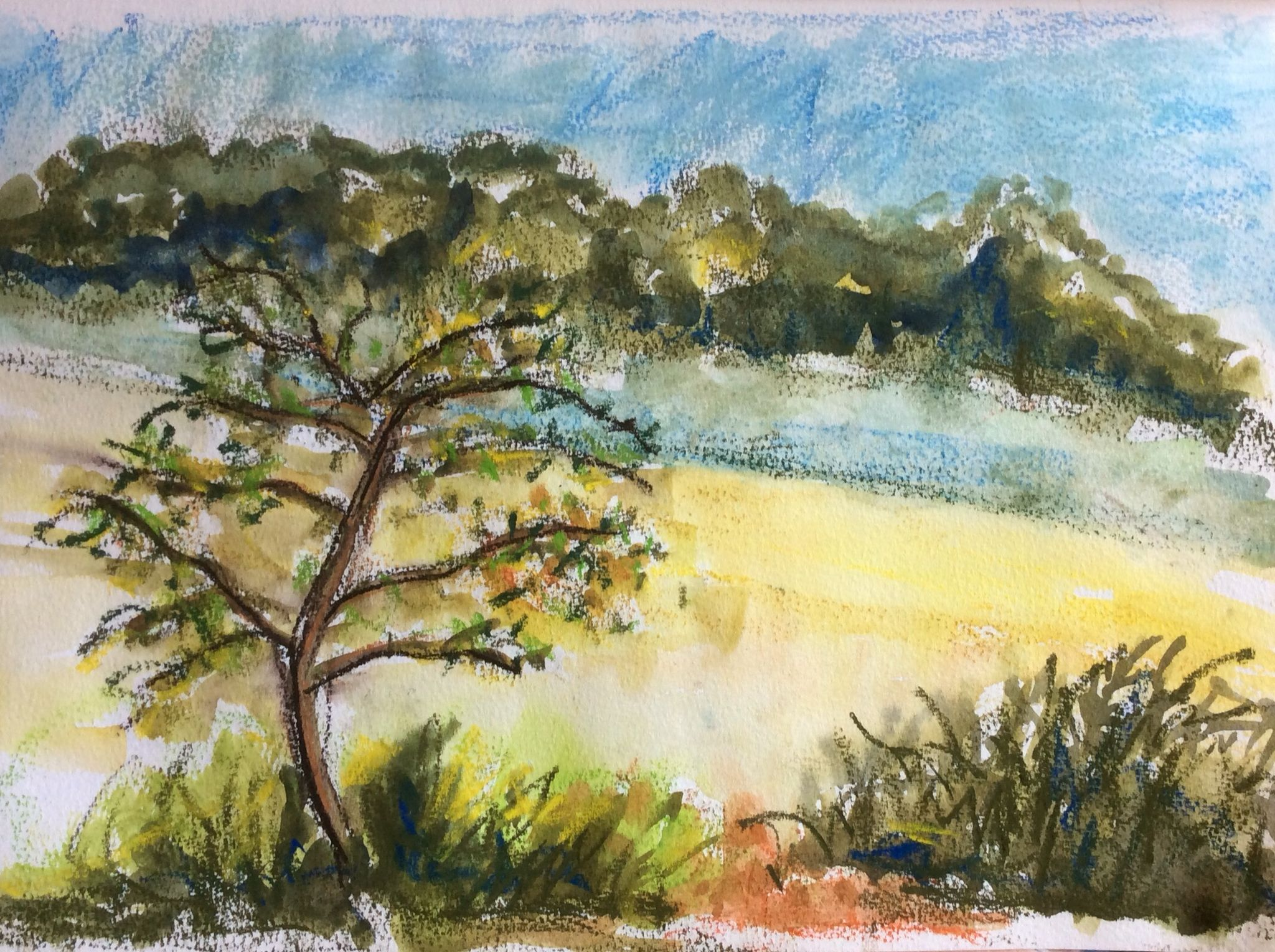 2016-08-30 7.30am Mist in the field