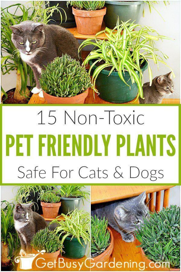 15 Indoor Plants That Are Safe For Cats And Dogs Cat