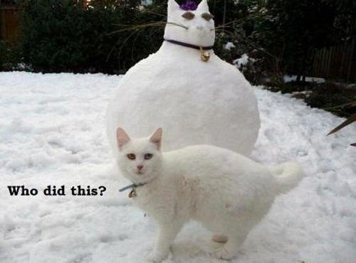 Do I look fat in this snowman? | ha! | Pinterest | Cats, Snowman ...