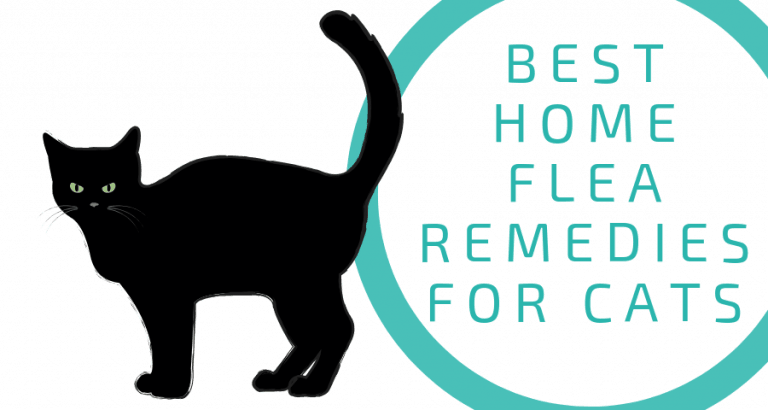 Home Remedies For Fleas On Cats Without Bathing Flea Remedies Home Remedies For Fleas Fleas