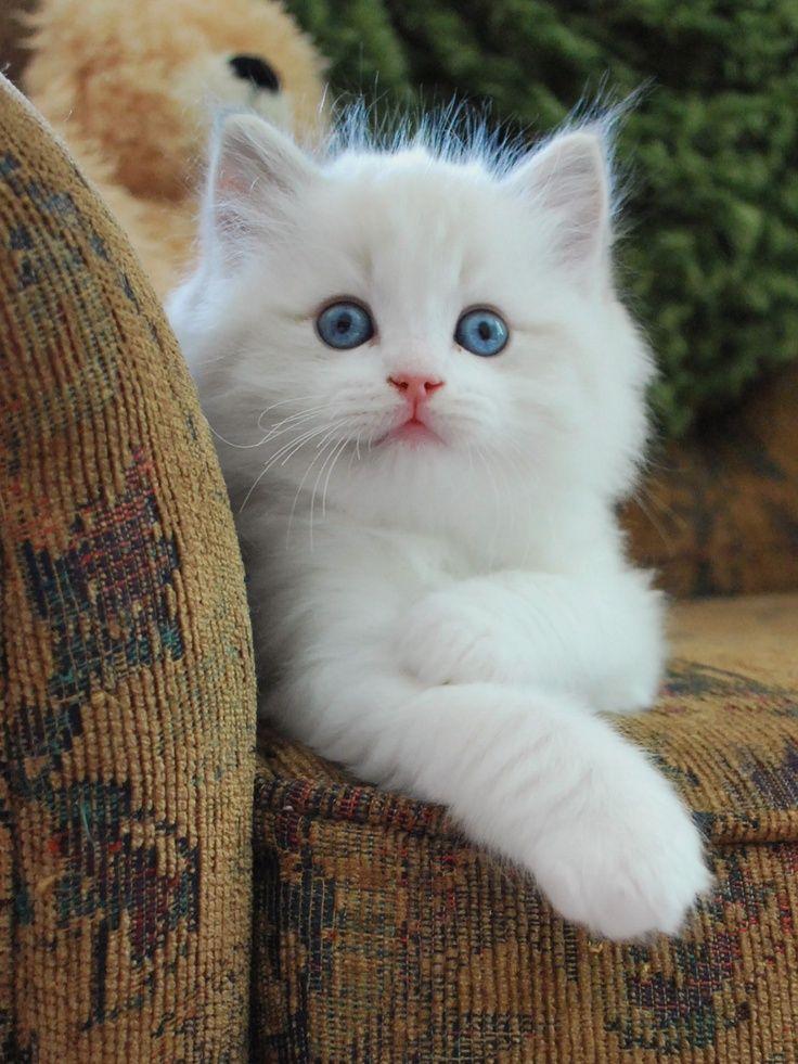 Pin by αкαѕн rαthσrє on Phone Wallpaper Kittens cutest