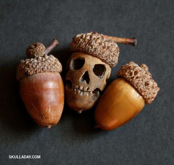 Acorn carved into skull face with dremmel tool i like