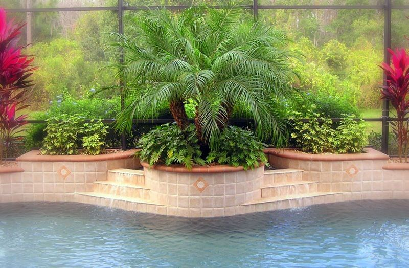 greenery in raised planters behind pool swimming pool landscapinglandscaping ideasswimming