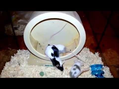 Funny Mäuse - YouTube