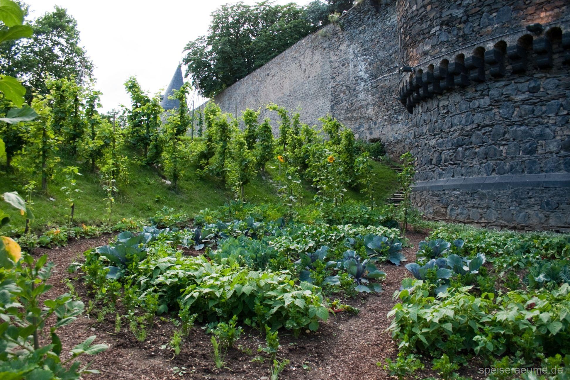 Essbare Stadt Andernach Speiseraume Stadt Ernahrung Andernach Urbane Landwirtschaft Bluhende Pflanzen