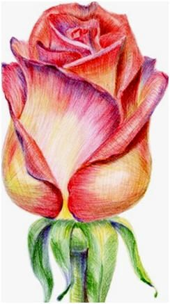 Create Colored Pencil Still Life Drawings Landscapes Portraits And