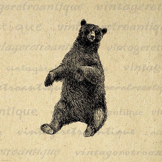 11x14 Printable Sitting Bear Graphic Illustration Antique