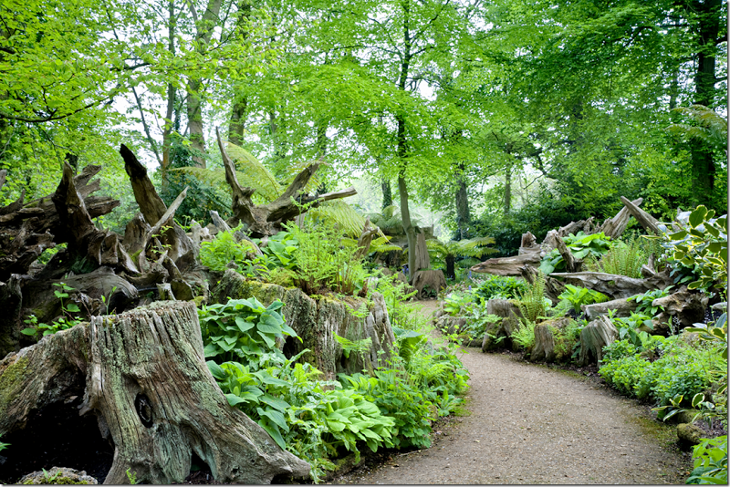 The Stumpery - a garden made out of old  tree stumps and filled in with hostas and ferns...Highgrove, England
