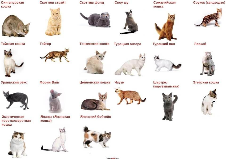 также разновидности кошек с картинками предсказания сбывались сбываются