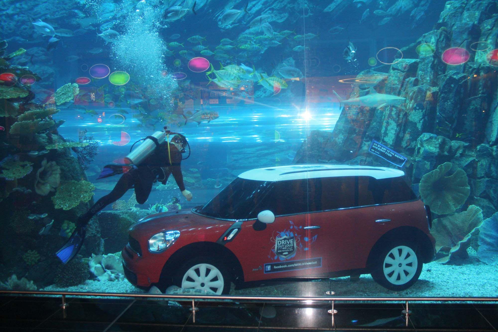 Dubai underwater zoo dubai aquarium and underwater zoo shocking world