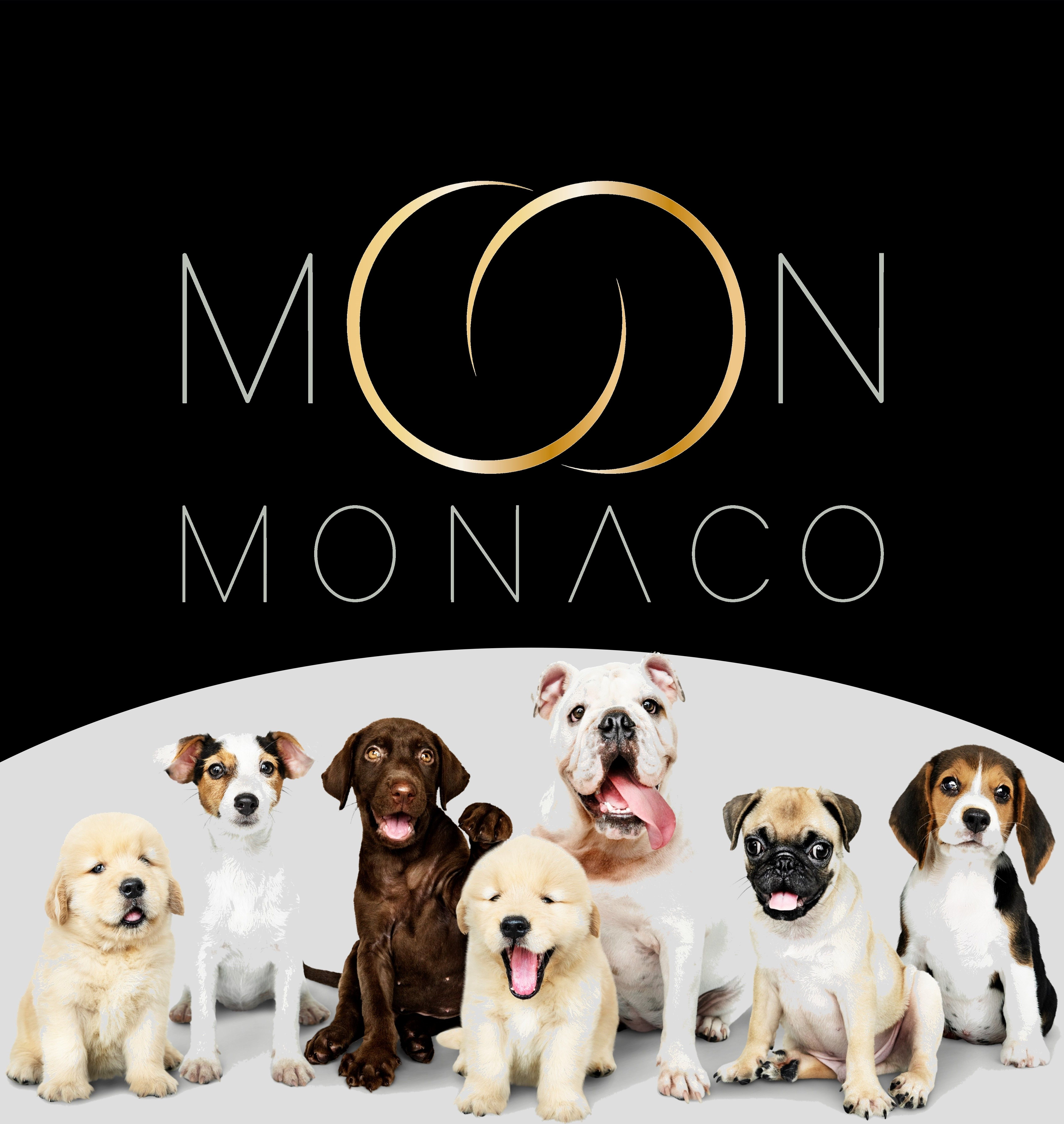 #FeelGoodInstant #MoonMonaco #FineJewelleryForPets #18CaratGold #NewCollection #Celestial #FashionForPets #Monaco #Design #DogLovers