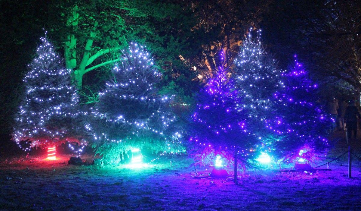 70 reference of christmas light winter garden in 2020