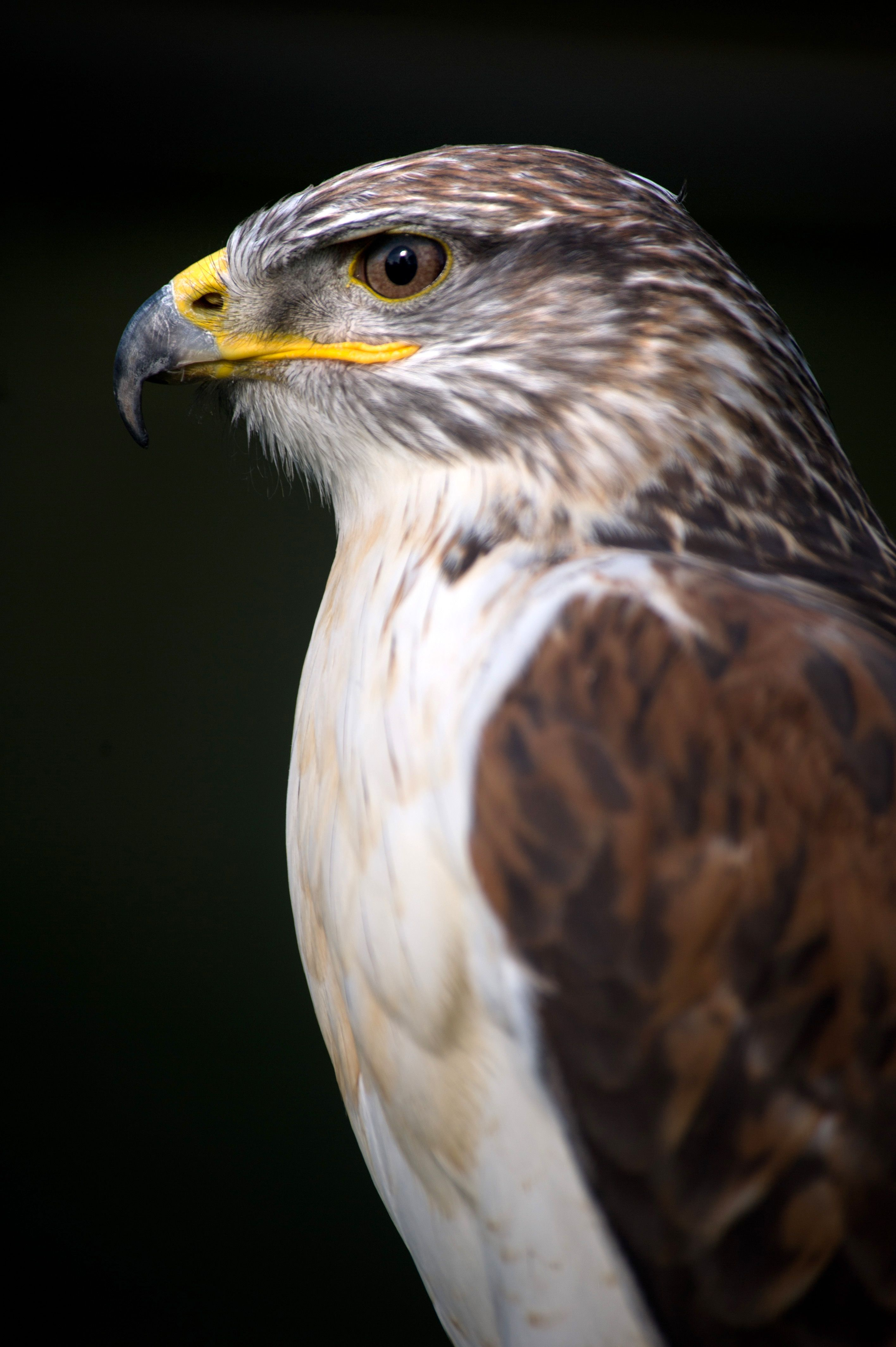 Planning To Go On A Hawk Walk While At Dalhousie Castle In Edinburgh Scotland This June Cool