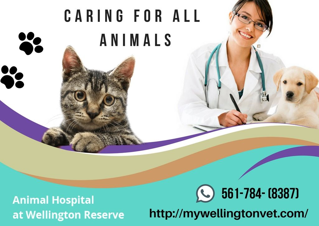 Caring for Your Pet Animal hospital, Pet clinic, Animals