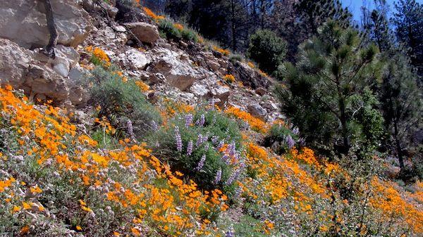 Figueroa Mountain Road near Catway Road | Near Santa Barbara, CA