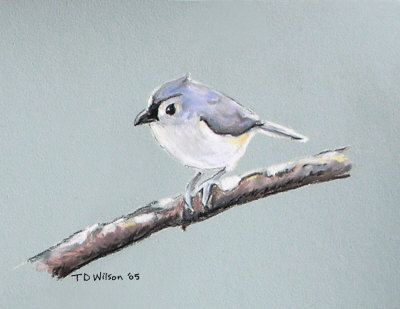 Tufted titmouse study