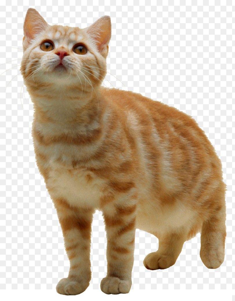 23++ Kitty pet info