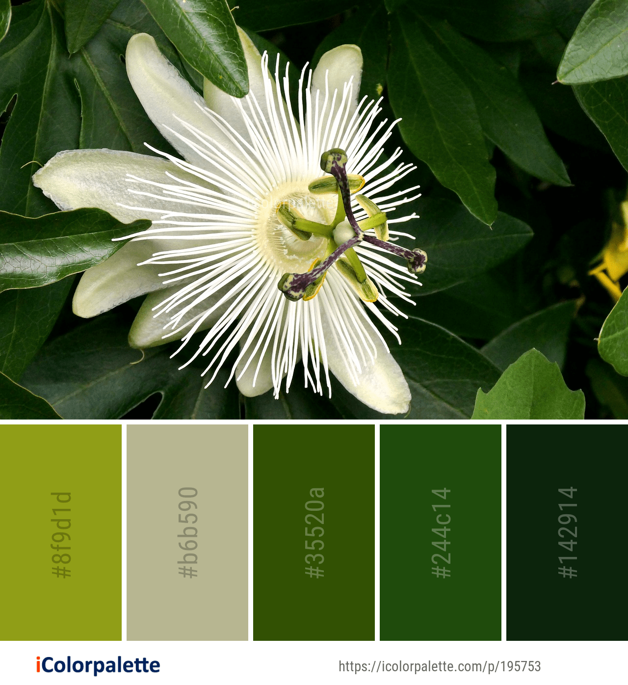 Color Palette Ideas From 8847 Flower Images Icolorpalette Color Palette Flowers Color