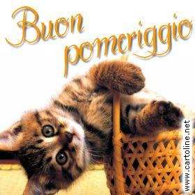 Gatto augura buon pomeriggio buon pomeriggio cute cats for Buongiorno con gattini