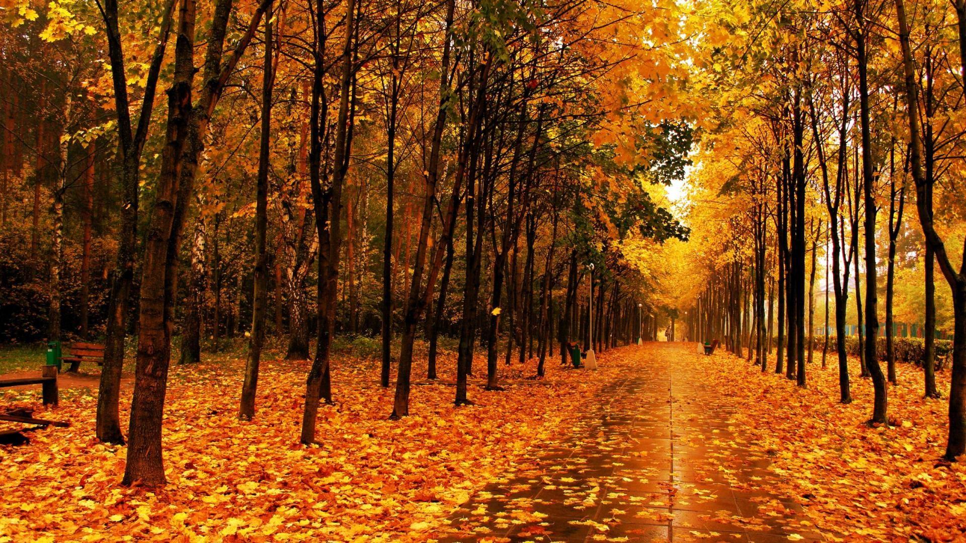 Autumn Rain Wallpaper Mixhd Wallpapers Autumn Park Scenery Wallpaper Rain Wallpapers