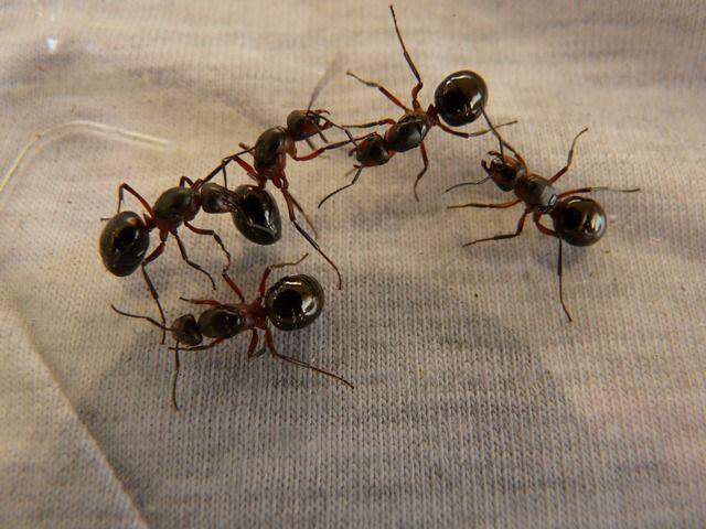 Hercules Fence Newport News Virginia Ants Wood Ants Types Of Ants