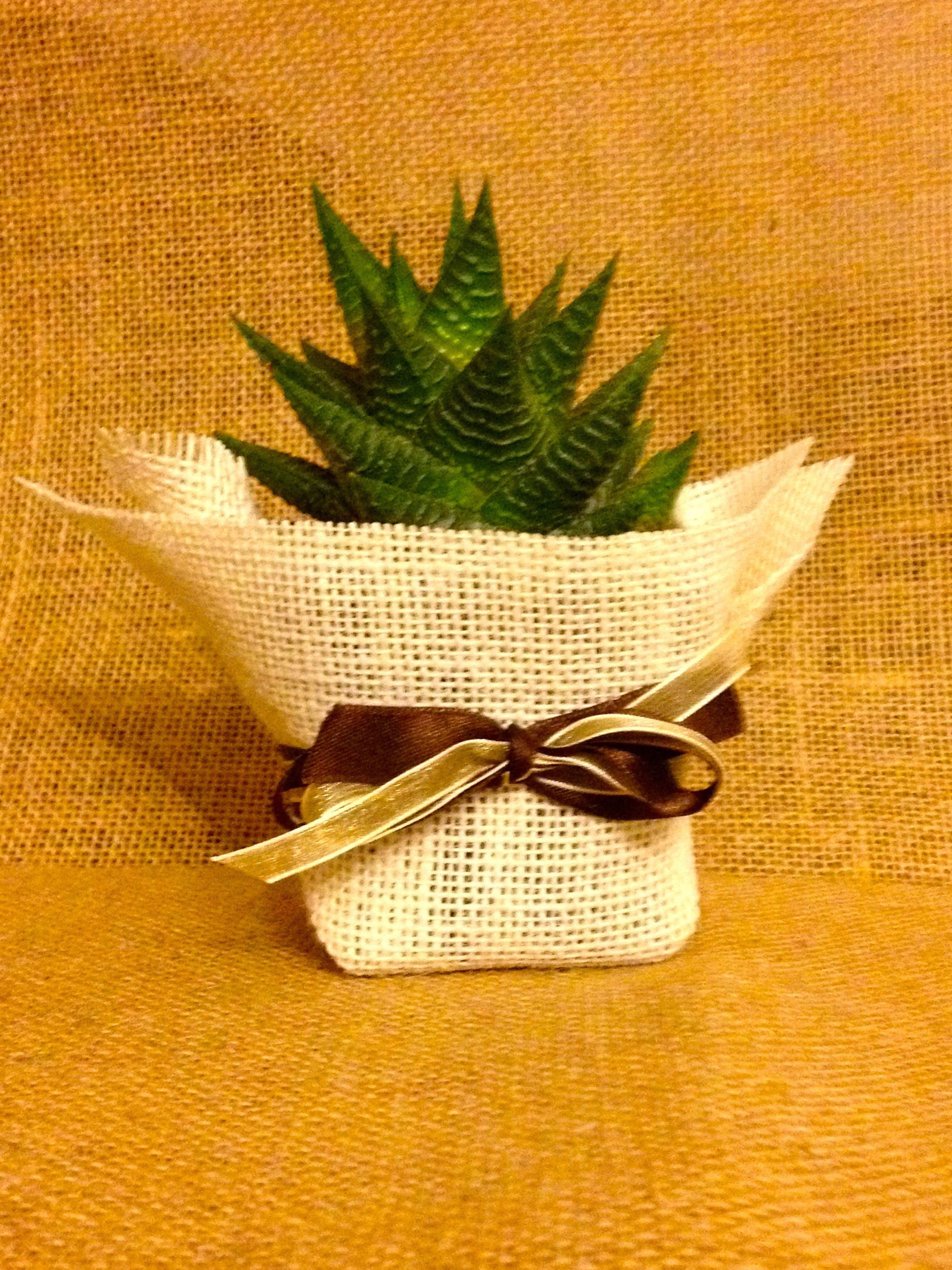 Maceta de 7 cm presentada en tela arpillera yute de - Tela de saco ...