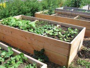 Eco Ideas Y Reciclaje Asociacion De Cultivos En El Huerto Urbano Huerto Urbano Huerto Asociacion De Cultivos
