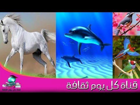 هل تعلم ما هي فائدة الذيل عند الحيوانات مثل الحصان الاسماك الطيور وغيرها ستندهش Horses Animals