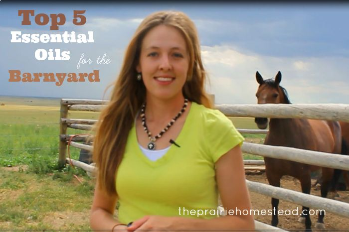 My Top 5 Picks for Essential Oils Around the Barnyard