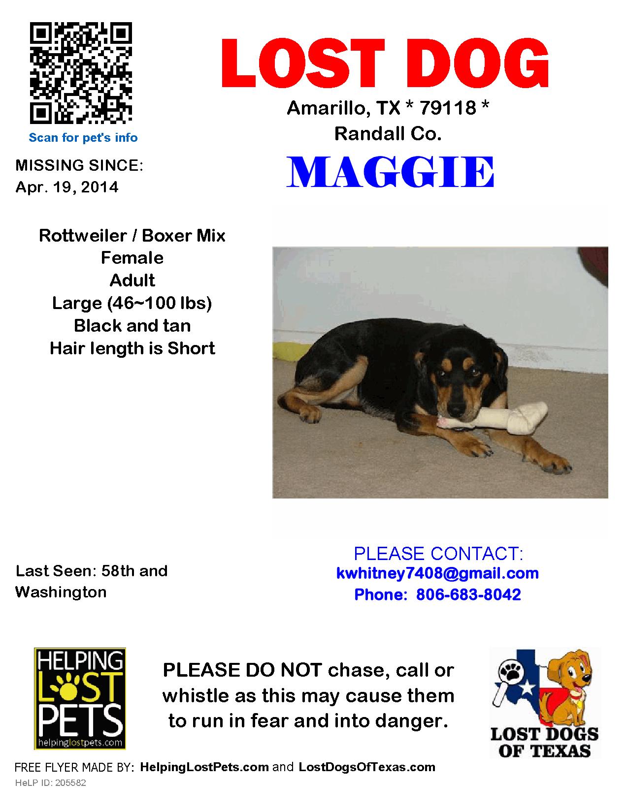 Lost Dog Female Amarillo Tx Usa 79118 Losing A Dog