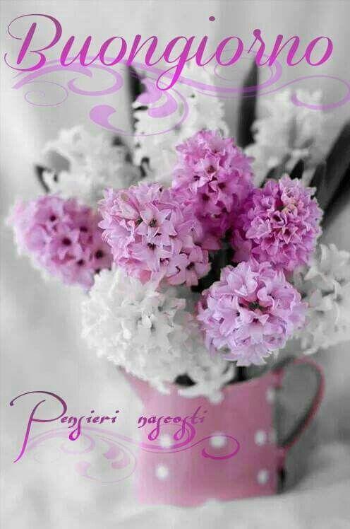 Bonjour Buongiorno Fiori Fiori Composizioni Floreali