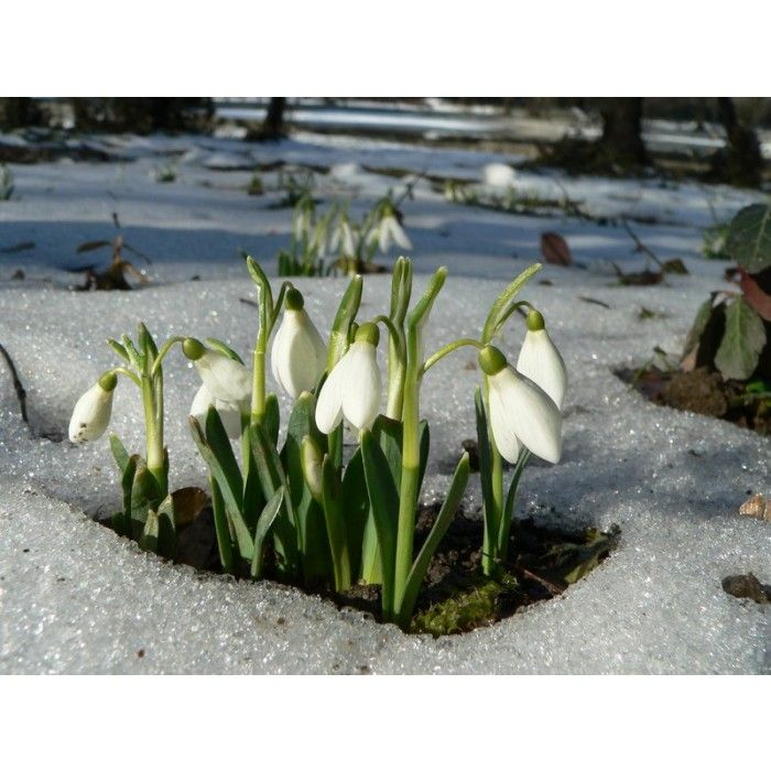New Blog. Plant bulbs in the green. Late February and  March is the time to plant bulbs in the green. What better way to celebrate the end of winter!
