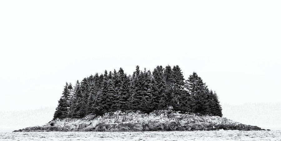 500px / Trees growing on rocks by Fred Walker