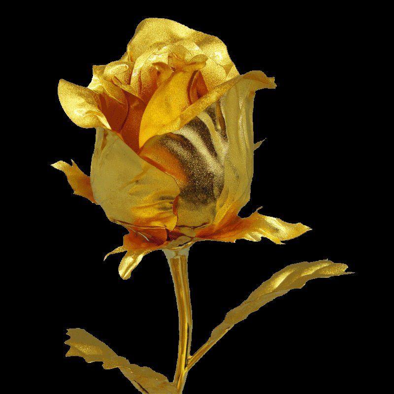 Top Golden Rose Black Wallpapers