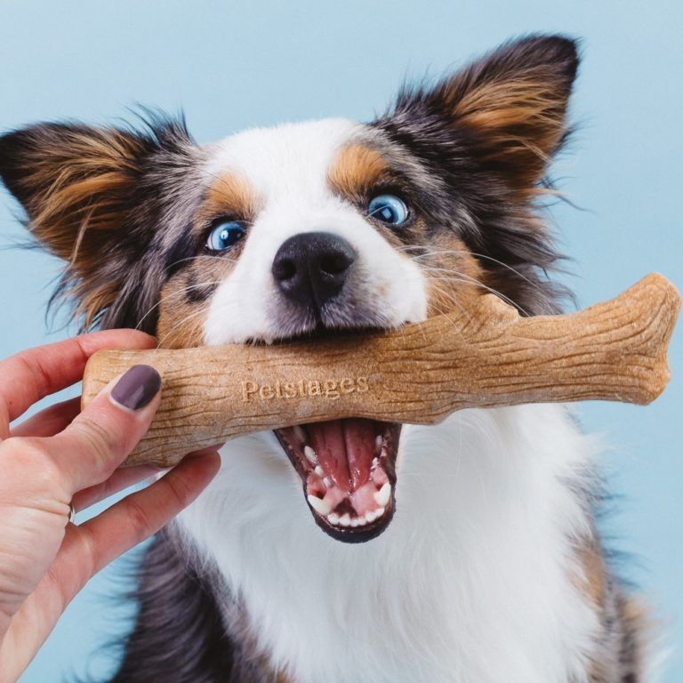 how to get rid of fishy smell from dog mouth