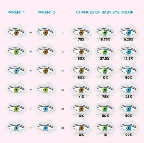 Baby Eye Color Calculator, Chart And Predictor Baby eyes, Babies - baby chart