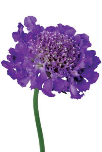 filler flower