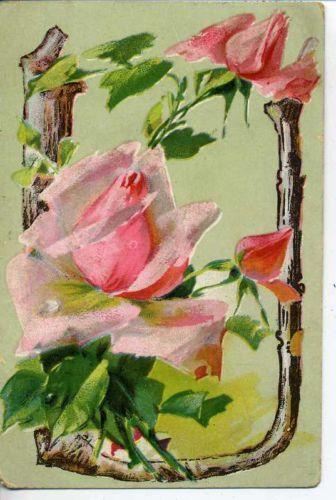 VINTAGE LARGE LETTER POSTCARD U PINK ROSES MARYLAND MD.