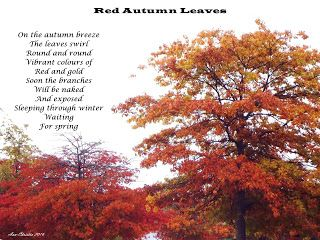 Poetry-poem-photography-autumn-red-leaves
