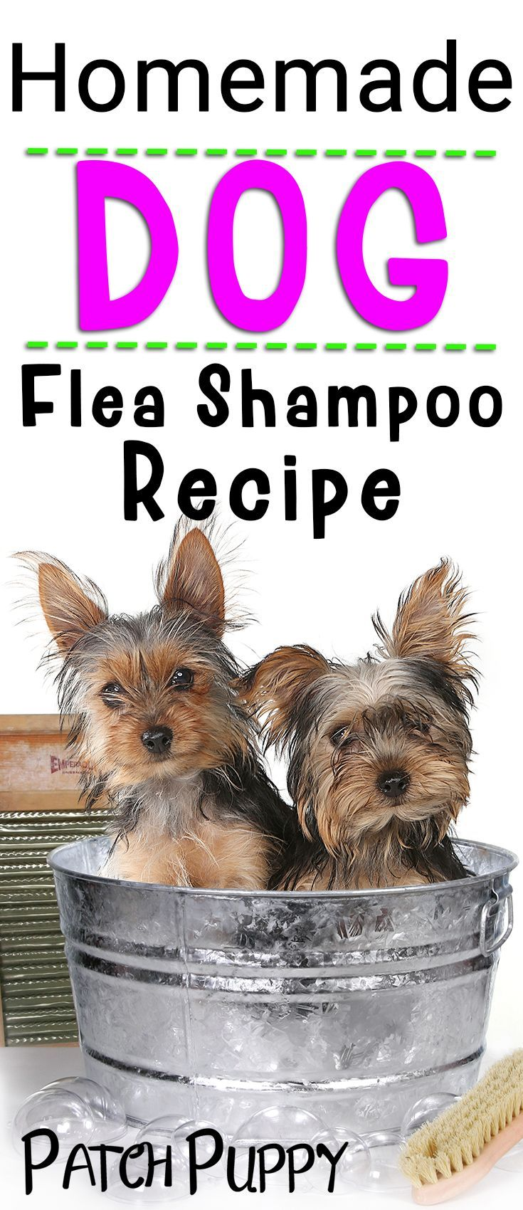 Diy dog flea shampoo a home remedy that works flea