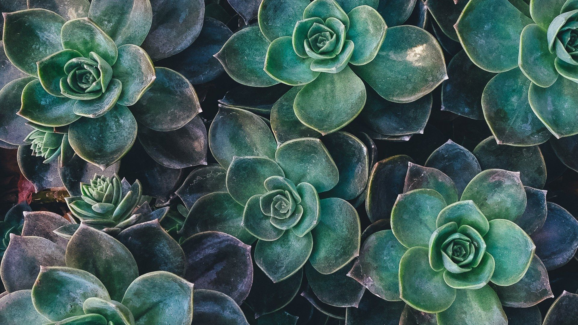 Image result for succulents hd (With images) Computer