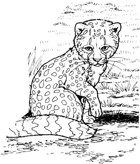 Baby Cheetah Coloring Pages For Kids | Relaxation | Pinterest ...