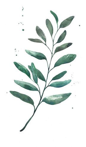 Watercolor Leaf On Behance With Images Watercolor Leaves
