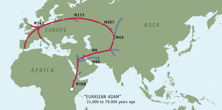 yDNA - Haplogroup R1b, M343 (Subclade R1b1a2, M269) | My