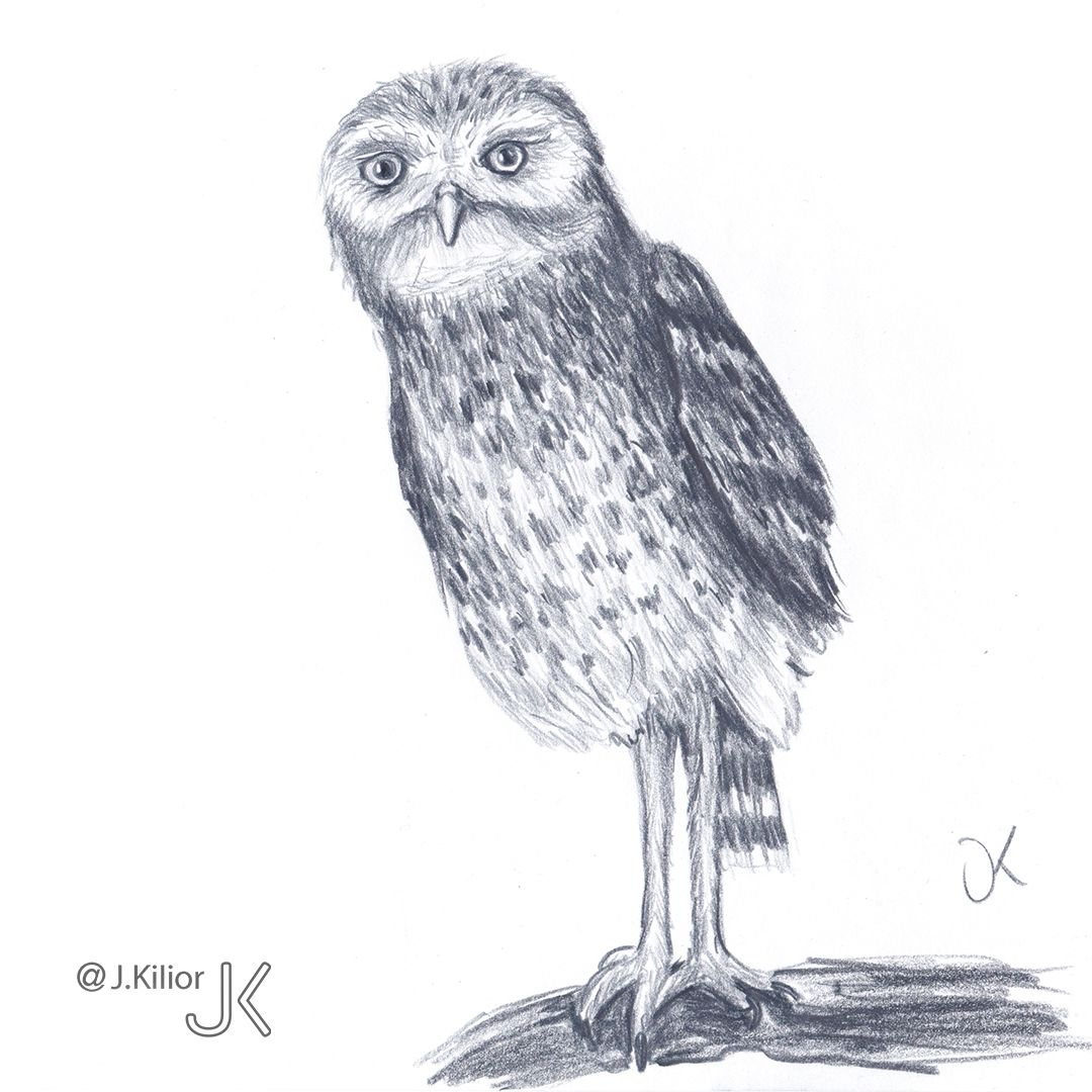 Burrowing Owl Drawing Time Lapse