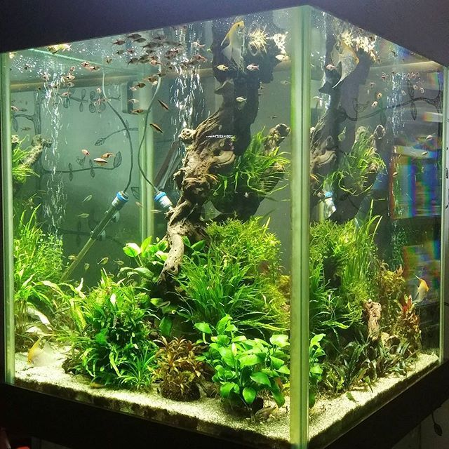 Love This Tank It Will Be Always Freshwater Aquarium Freshwater Aquarium Fish Aquarium Fish Tank