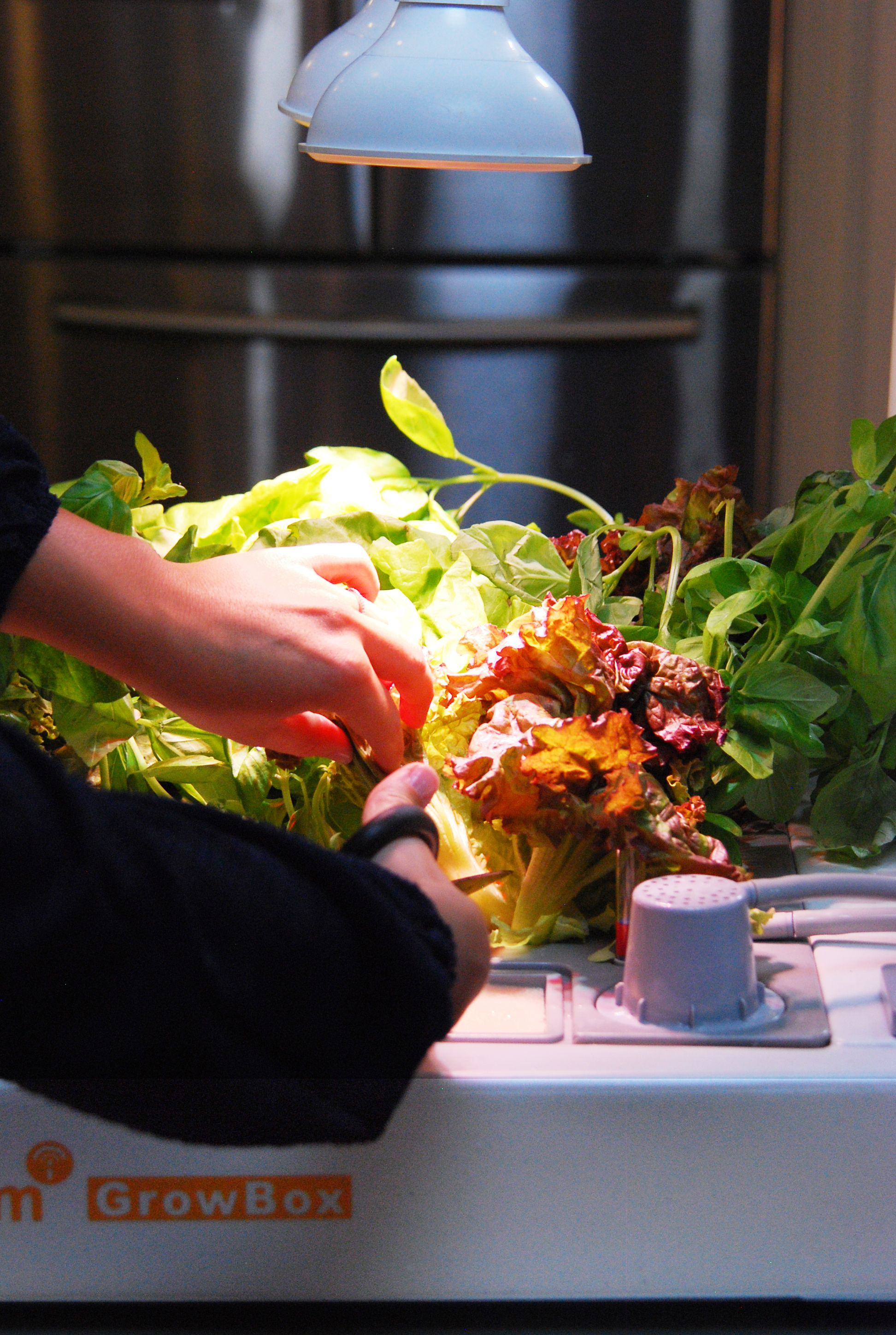 This Soil Free Tabletop Indoor Gardening System Allows 640 x 480