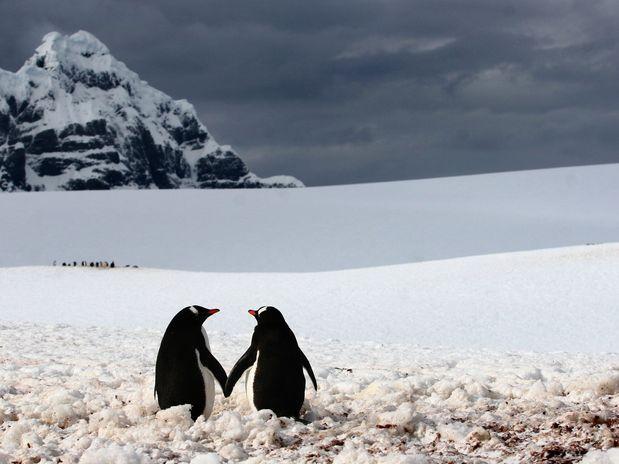 O romeno Silviu Ghetie, 43 anos, registrou este momento romântico na Antártida  Foto: The Grosby Group
